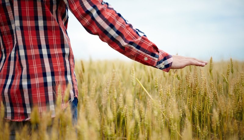 Diploma Servizi Agricoltura